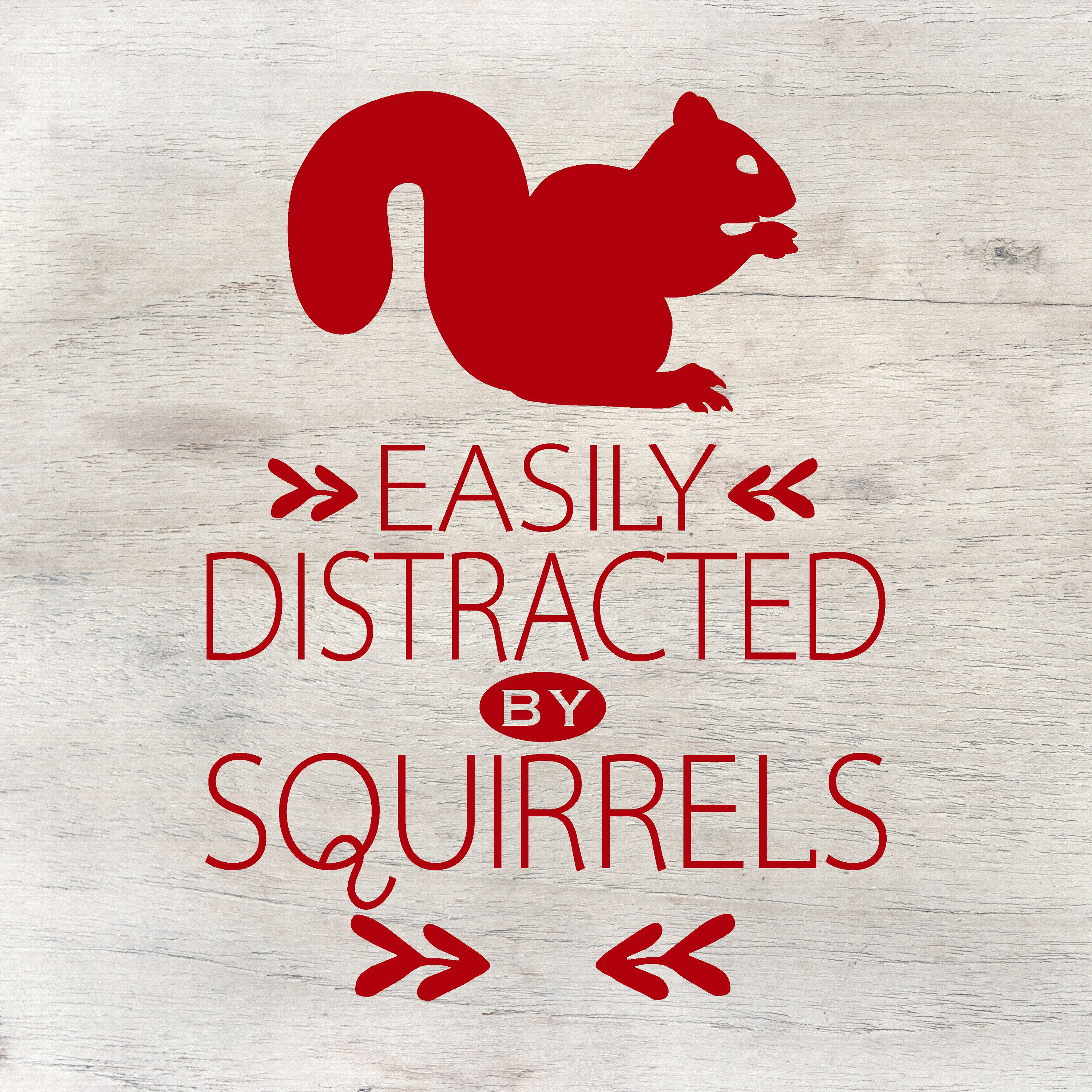 Easily Distracted by Squirrels, Funny Bumper Stickers for