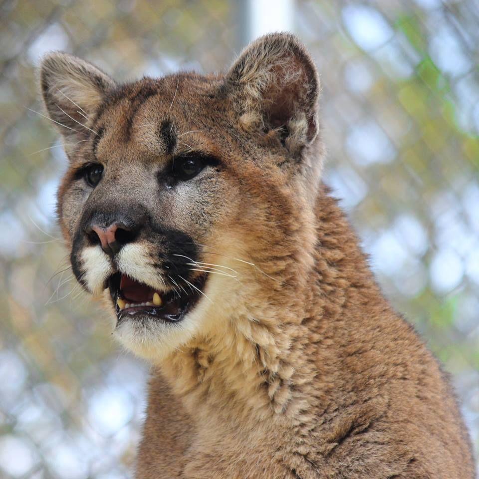 ZOOAMERICA North American Wildlife Park North american