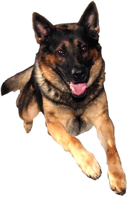 Dog Jumping Transparent Background Pinterest