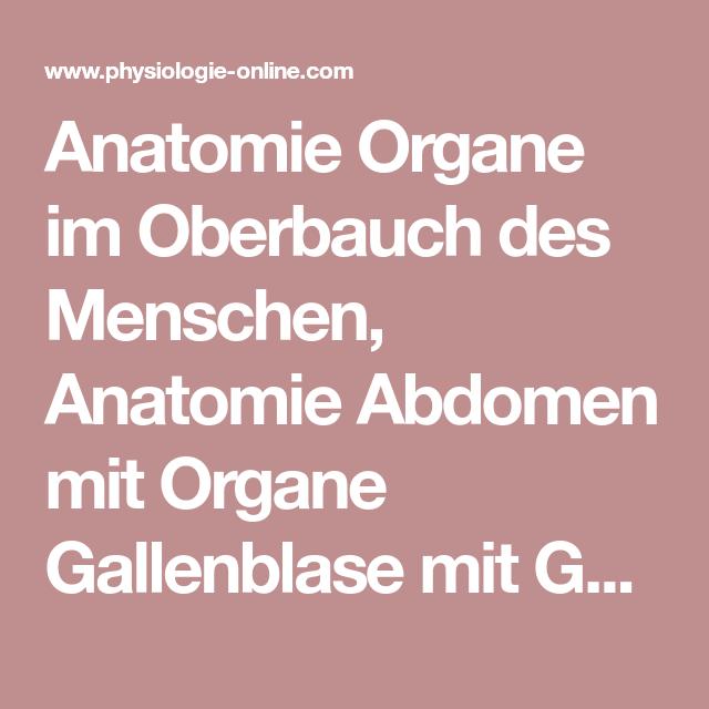 Anatomie Organe im Oberbauch des Menschen, Anatomie Abdomen mit ...