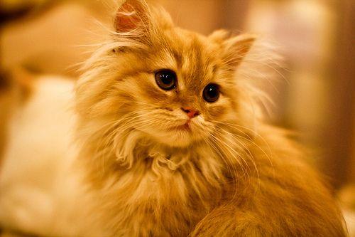 ginger, cat, kitten, tender, beautiful, animal