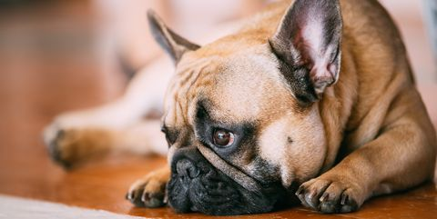 Study Finds That Yelling at Your Dogs Ruins Their Health
