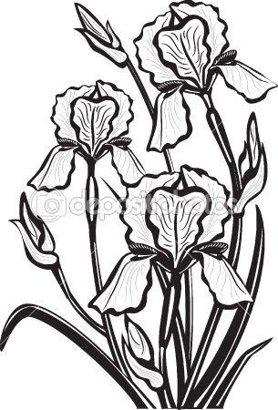 Sketch of iris flowers learn to draw croquis de fleurs dessin fleur dessin - Coloriage fleur iris ...