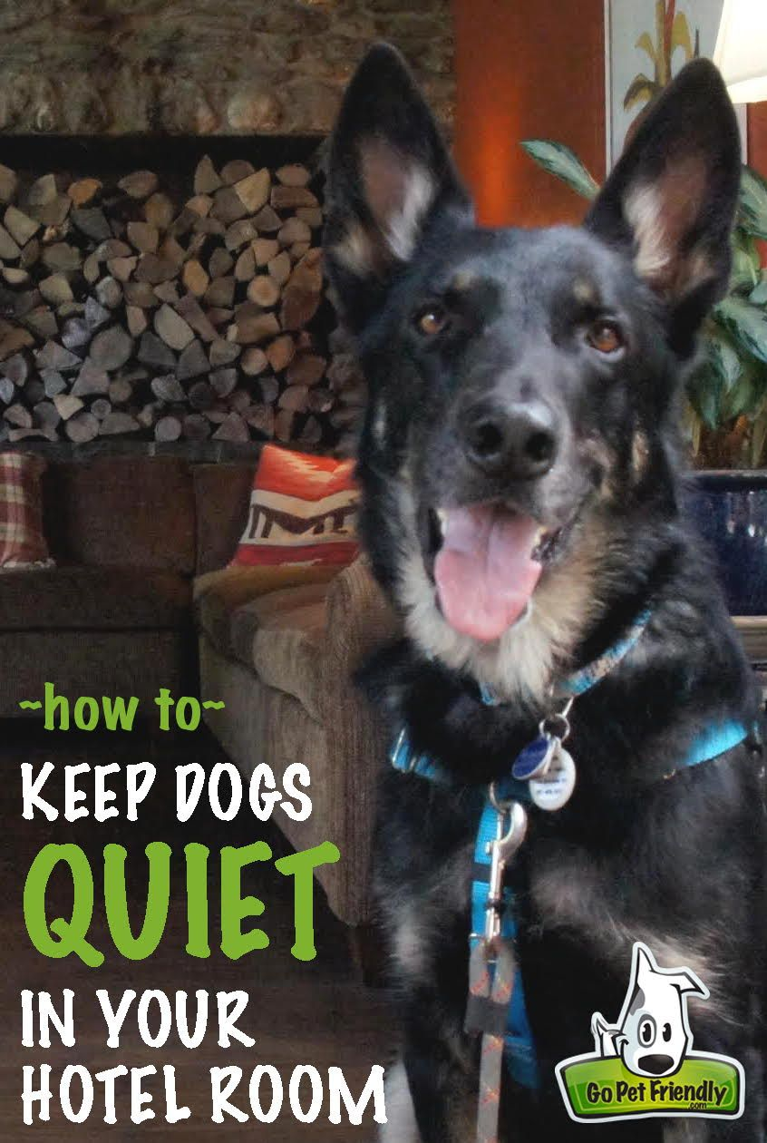 Tips For Keeping Dogs Quite In Hotel Rooms Dog Pet Travel And Room