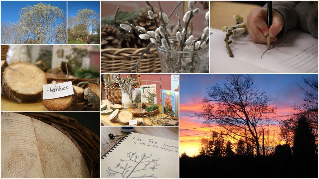 Love, Laughter, and Literacy Blog: Exploring Trees Through Inquiry - A Reggio Inspired Unit