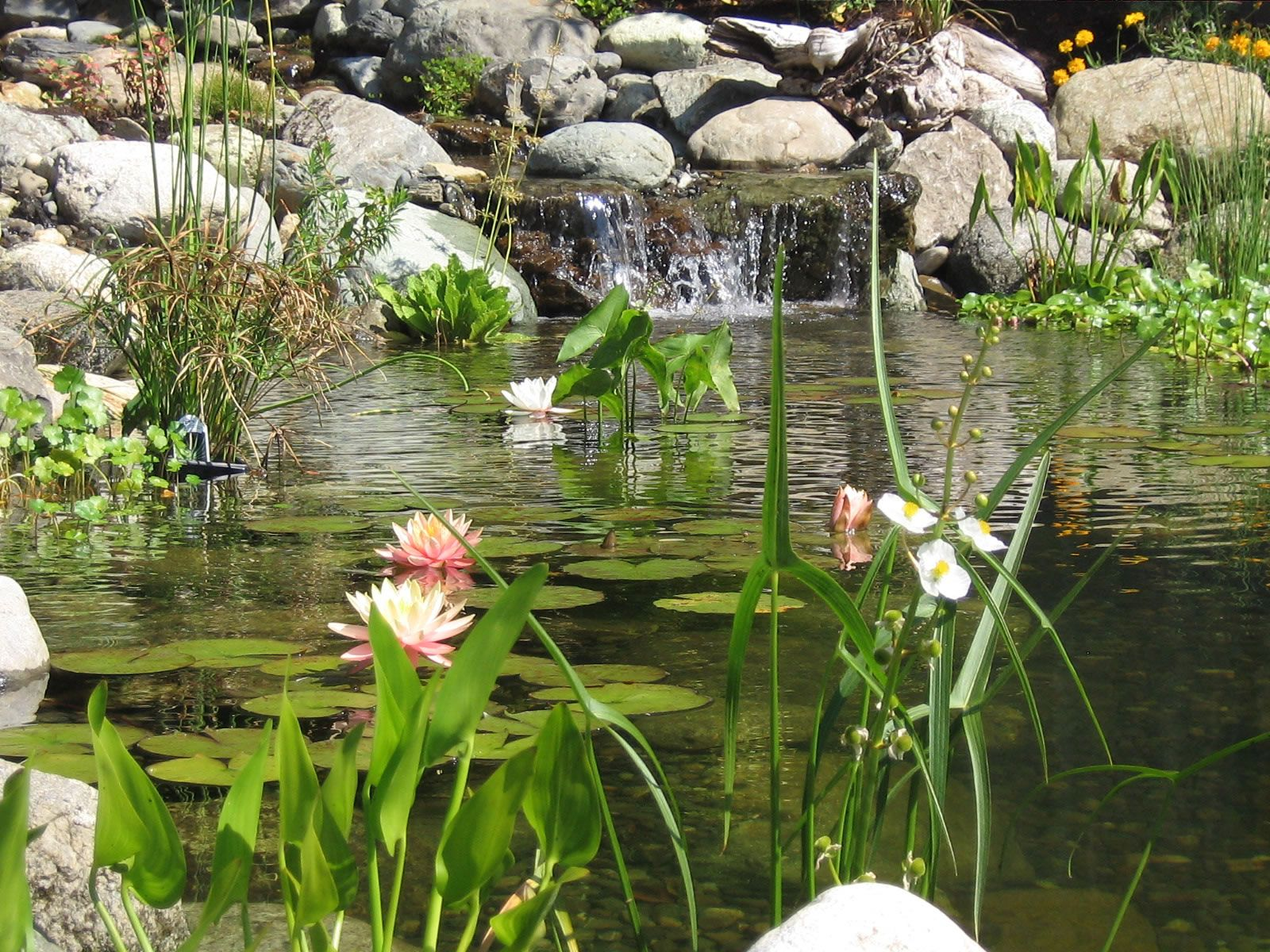 Water Garden Pond Make your garden interesting with the use of a water feature