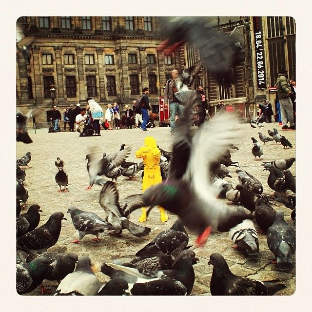 Don't feed the pigeons, they said. It's dangerous for you, they said. #livingontheedge #damsquare #hugmaninholland #theartofthebrick