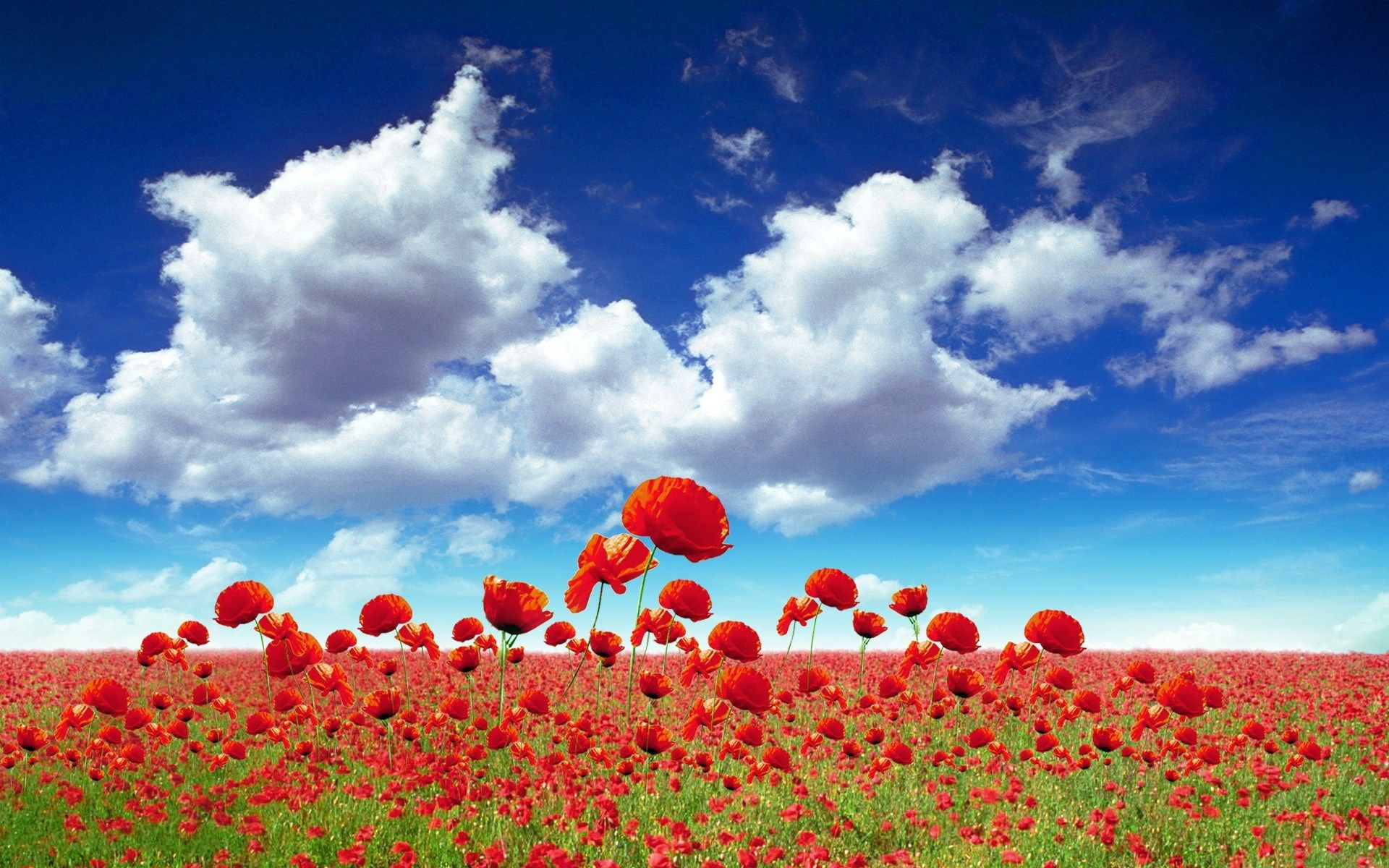 fitzpatrick jacobson - poppy images for desktop background