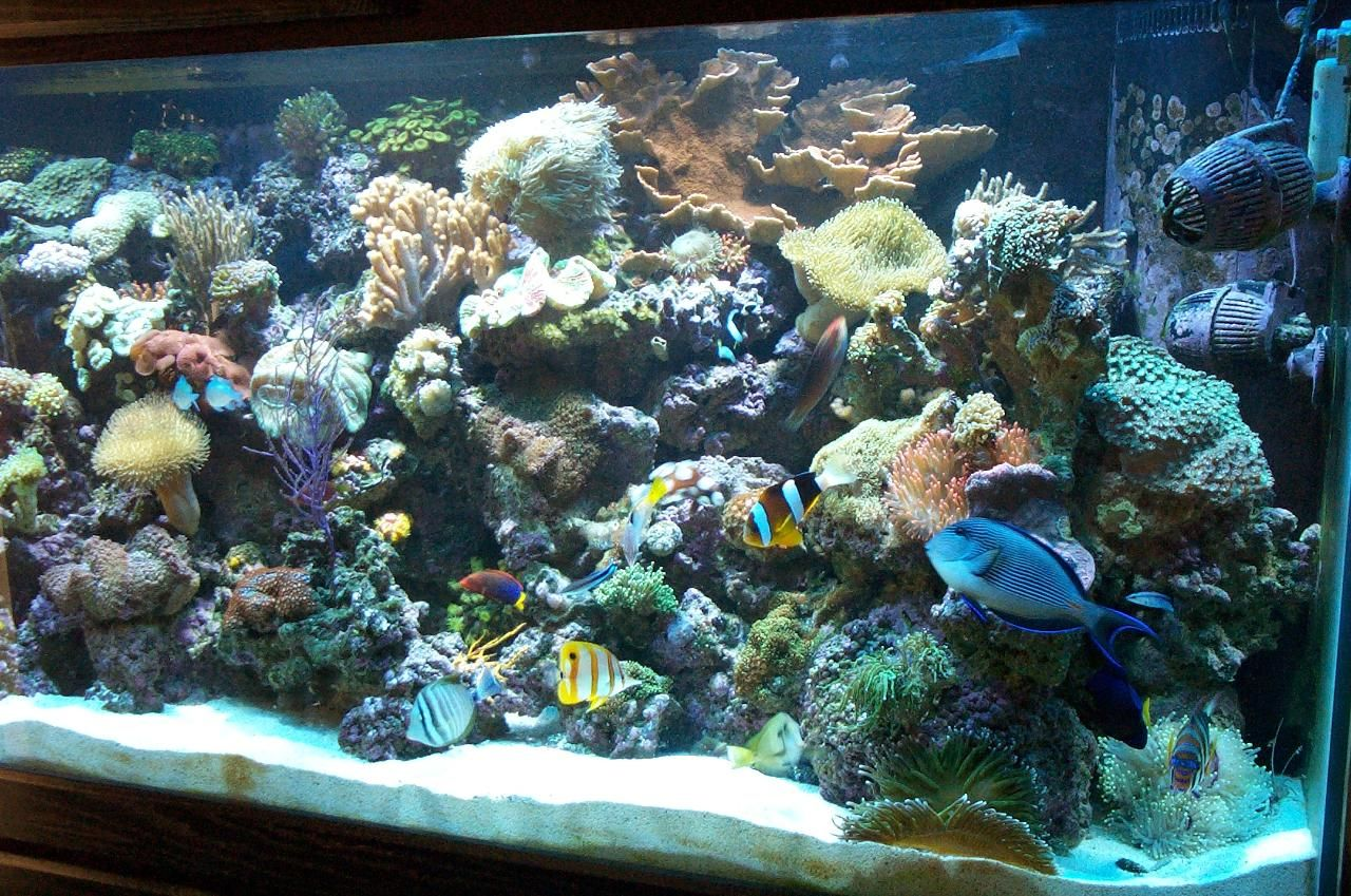 Really want to start a salt water tank future fish and for Starting a saltwater fish tank