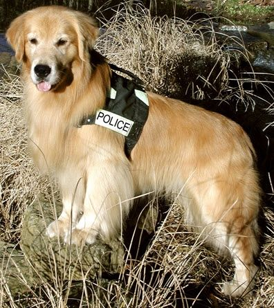 Pin By Snoox On Golden Retrievers Other Dogs Working Dogs Dog Hero Golden Retriever