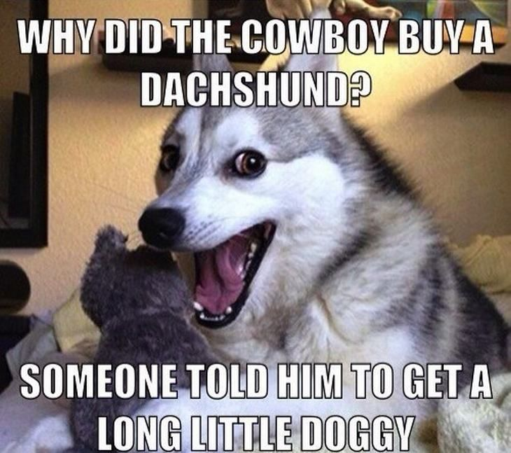 Why did the cowboy buy a dachshund someone told him to for Is today a good day to fish