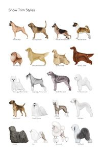Pet Trim Style Posters Https Www Facebook Com Bubblesandbarks Groomer Pinterest Dog Pet