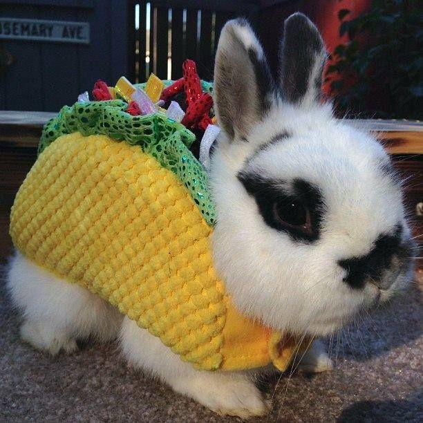 Taco Bunny | Stuff my kid would love | Cute baby bunnies