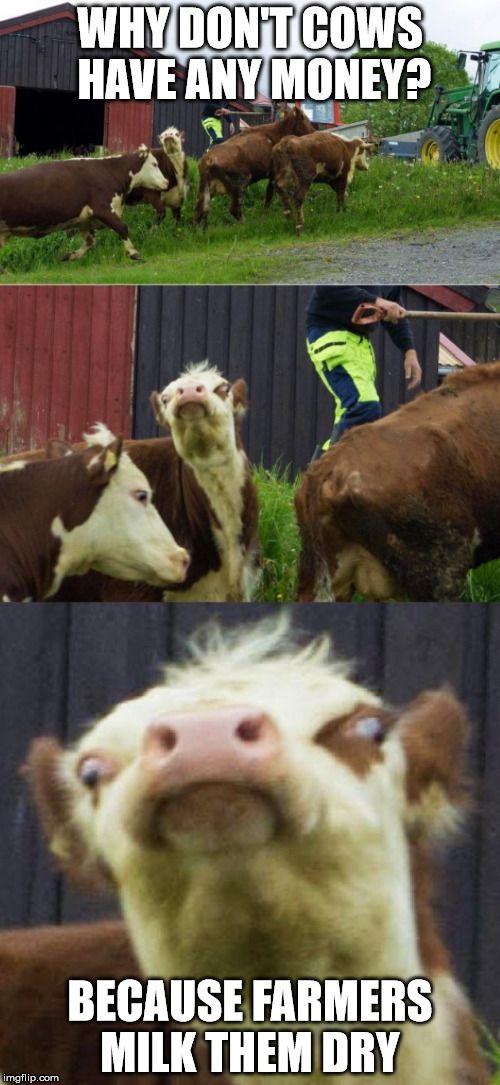 b9745e9f1024de0b1da2716007757c1c image tagged in bad pun cow,milk,money,farmer memes pinterest