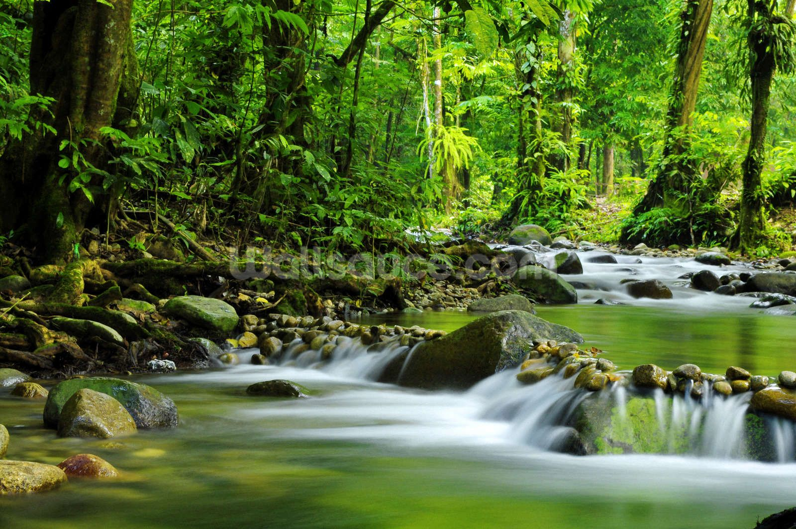 Beautiful Mountain Stream Forest wall mural, Landscape