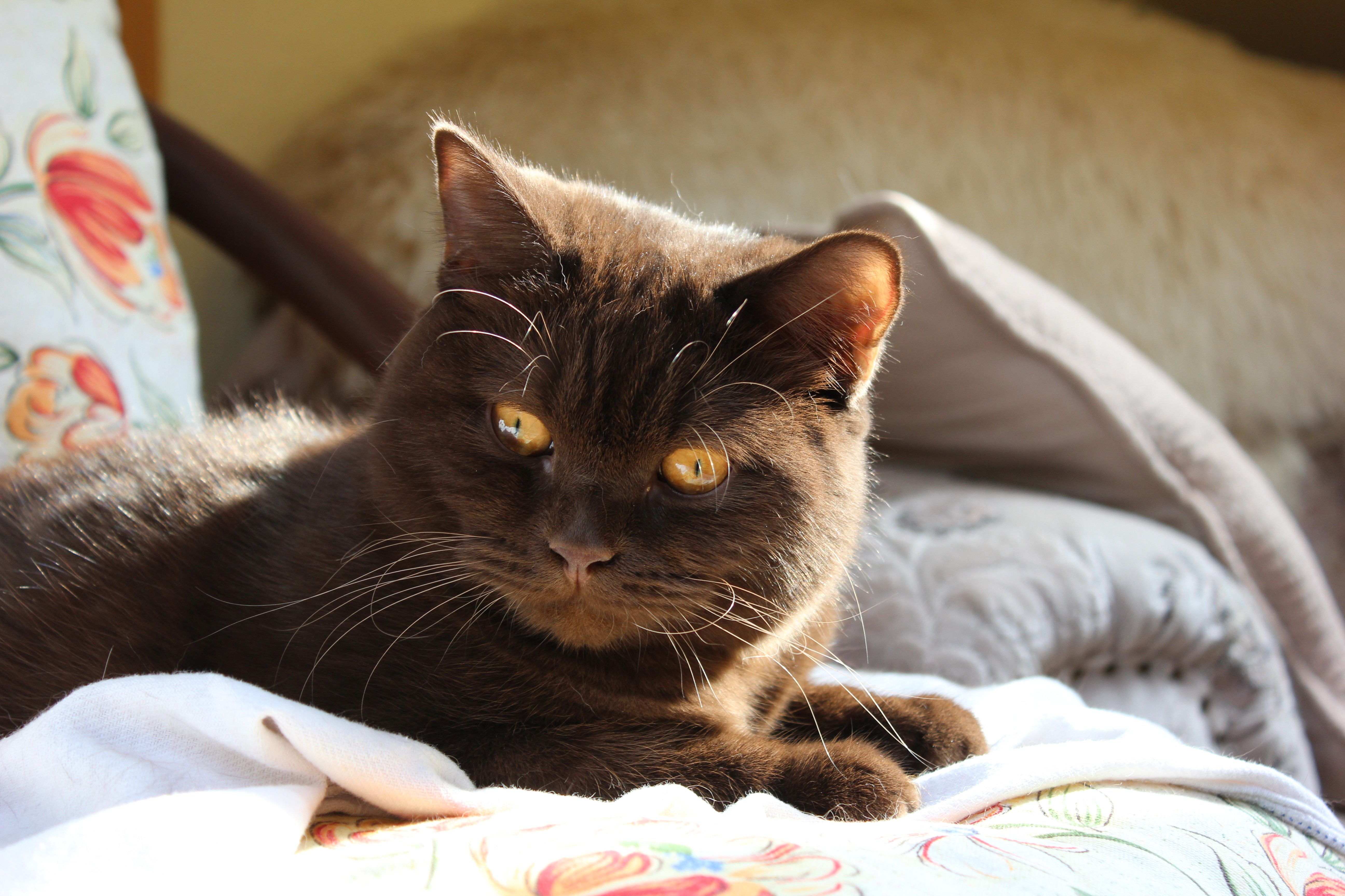 Geordie Quality cat, Cat photo, Cats
