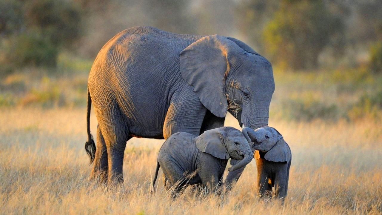Elephant Wallpapers High Definition Cute Baby Elephant Elephant Wallpaper Baby Elephant