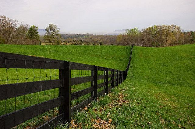 Rail Fence, Wire Mesh And Kentucky