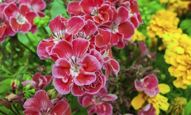 Las 4 flores más fragantes del mundo