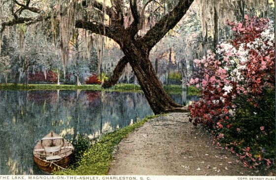 b97655946091039207bd6accb8345766 - Magnolia Plantation And Gardens South Carolina