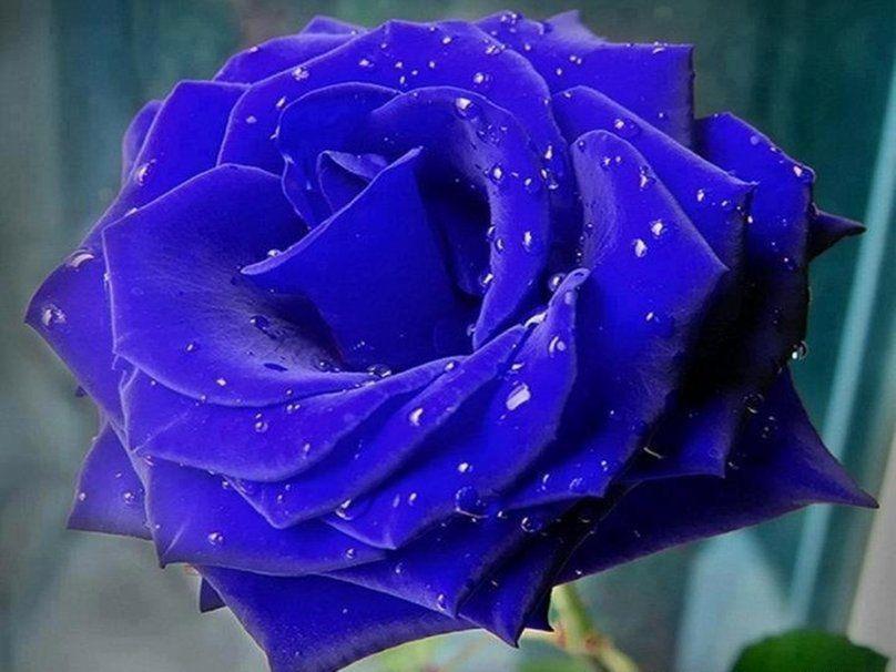 As Flores Mais Belas Do Mundo Pesquisa Google Rosas