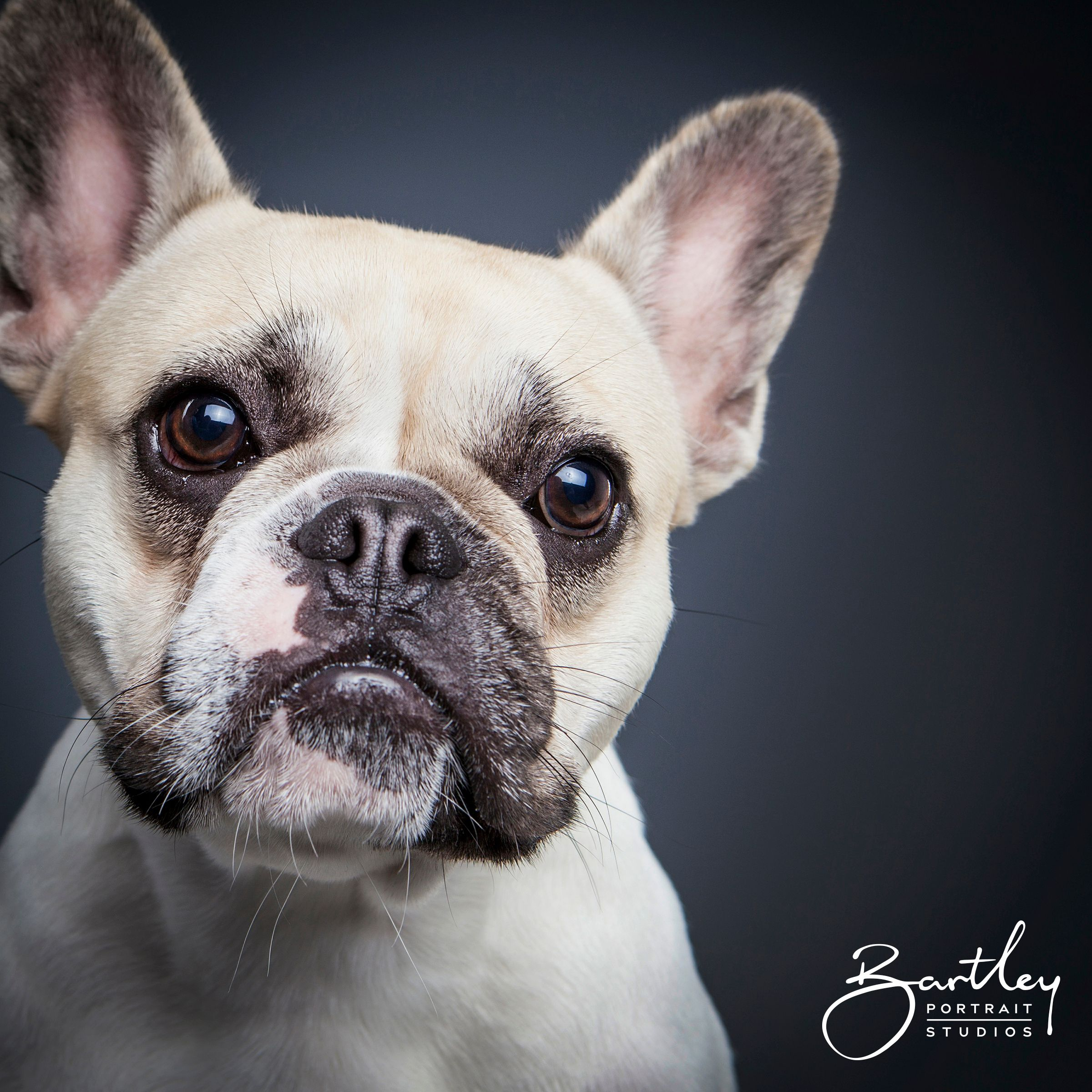 Too Cute Can T Cope Pet Dog Portrait Photography Inspiration