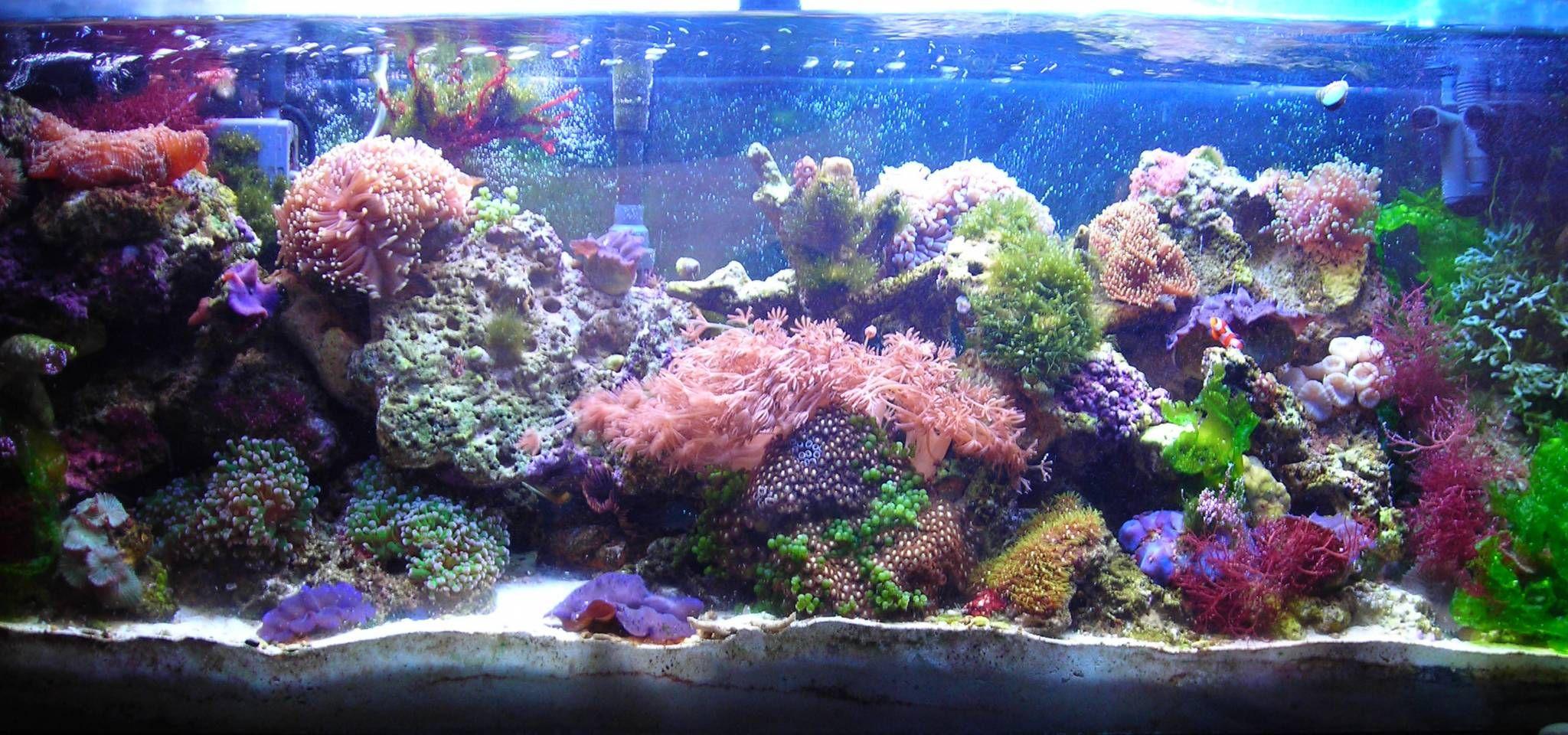 Pin by jennifer steuerwald on aquariums and fish pinterest