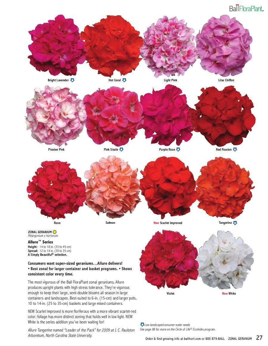 Geranium Colors | Flowers | Pinterest | Geranium color, Gardens and ...
