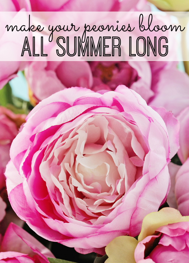 How to make your peonies bloom all summer Peony Shorts and Summer