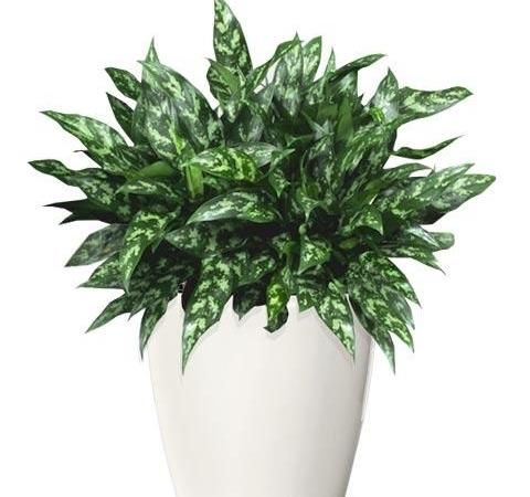Air Purifying Plants Portland Nursery Dennis 7 Dees