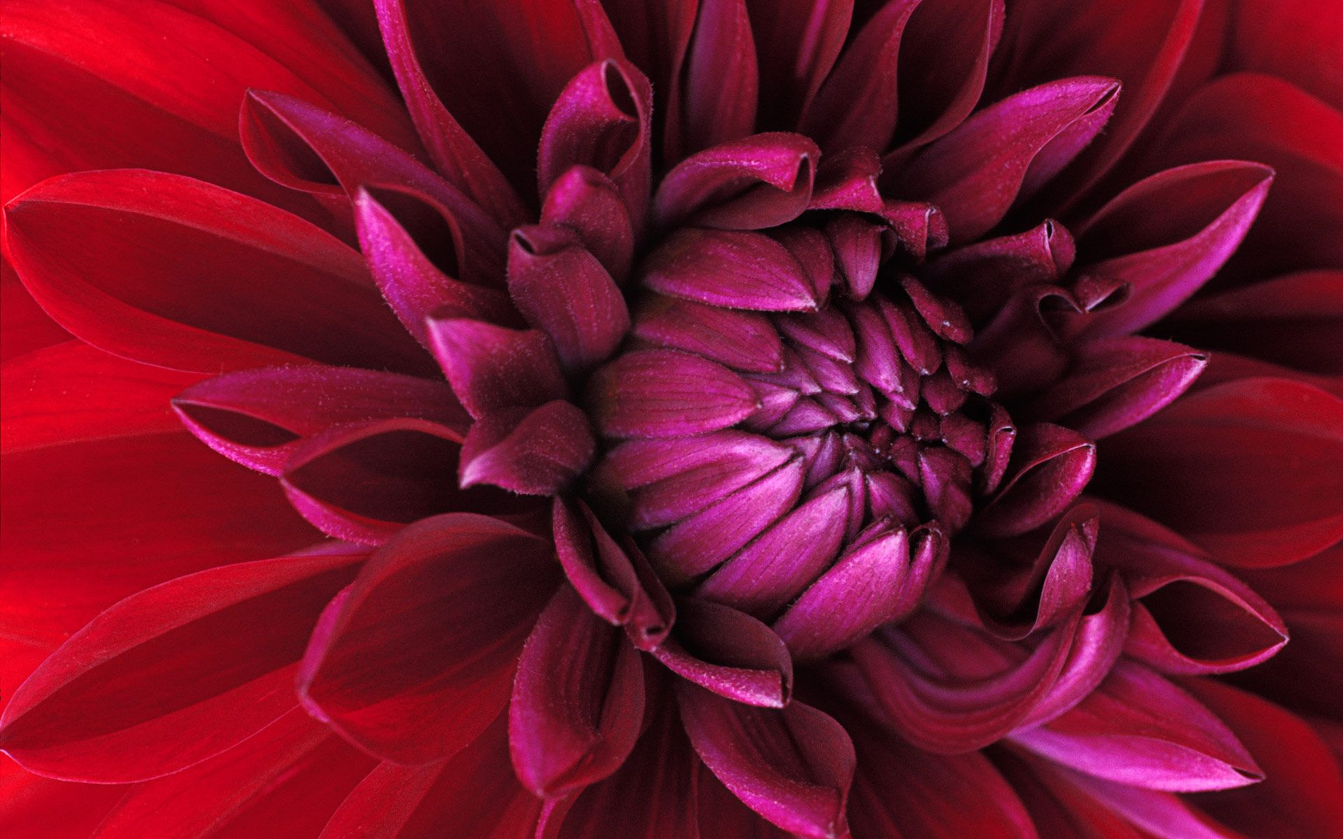 Color Inspiration Macro Photography Flowers Beautiful Flowers Wallpapers Macro Flower