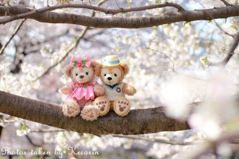 Duffy  his girl enjoying Sakura