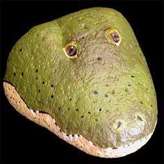 paint rocks alligator face - Google Search