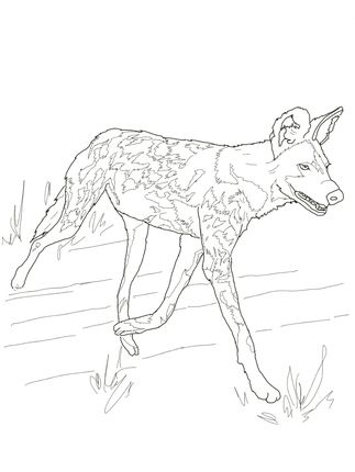 Click To See Printable Version Of African Wild Dog Or Painted