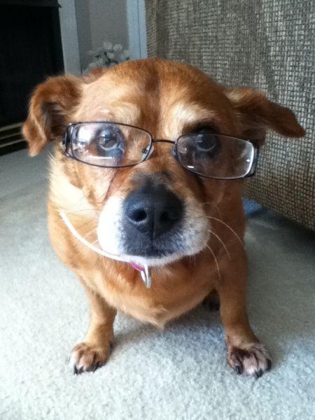 Sadie-glasses
