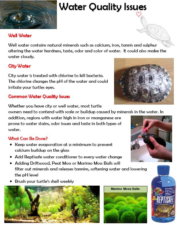 Water Quality Issues In Turtle Habitat Aquatic Turtle