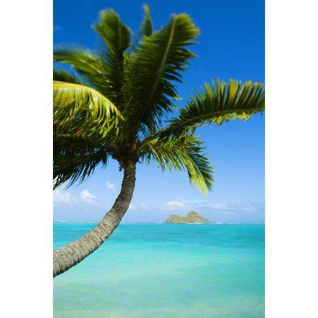 Usa Hawaii Oahu Palm Tree Over Pacific Ocean Lanikai Canvas Art Dana Edmunds Design Pics 11 X 17 Oahu Lanikai Beach Palm Trees