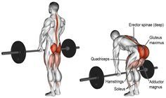 Romanian Deadlift Used For Extreme Muscle Growth And Strength