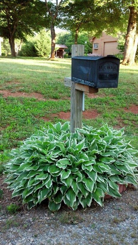Hostas around our mailbox Garden Pinterest