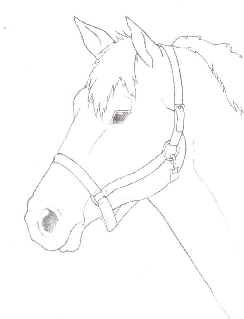 Image result for easy pencil drawing horse