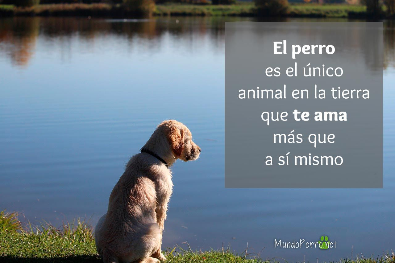Frases De Amor Para Perro En Ingle: Pin By Mundo Perro On Dogs Quotes