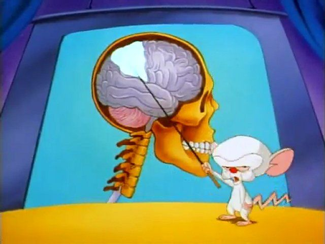 Afbeelding bij video hersenen pinky and the brain brain legt the video hersenen pinky and the brain brain legt the brain uit httpyoutube watchvngozyywa1dishareplkd p8cps0e80xrfwwthgkvs1 fxvtnmp ccuart Gallery