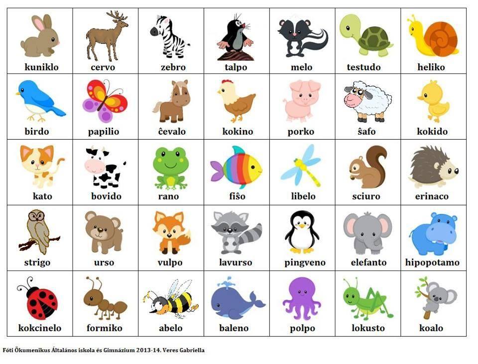 Карточки с животными на английском языке.
