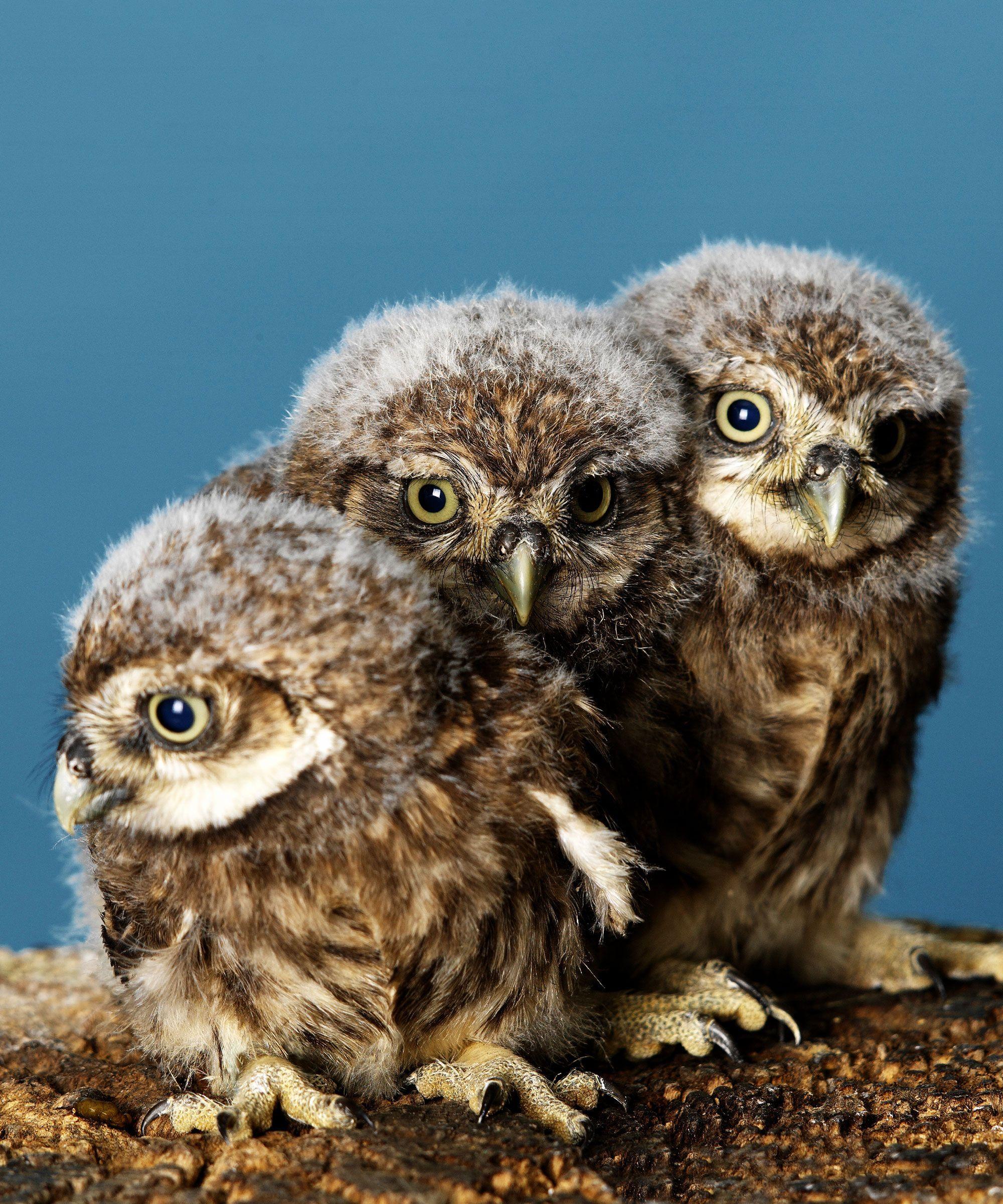 The Cafe Where You Can Sip Your Tea & Pet An Adorable Owl