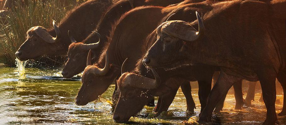 Sugen på att åka på safari i Tanzania? Afrikaresor erbjuder safari i Afrika, Tanzania är deras specialitet. Kolla deras safaris på http://www.afrikaresor.se/