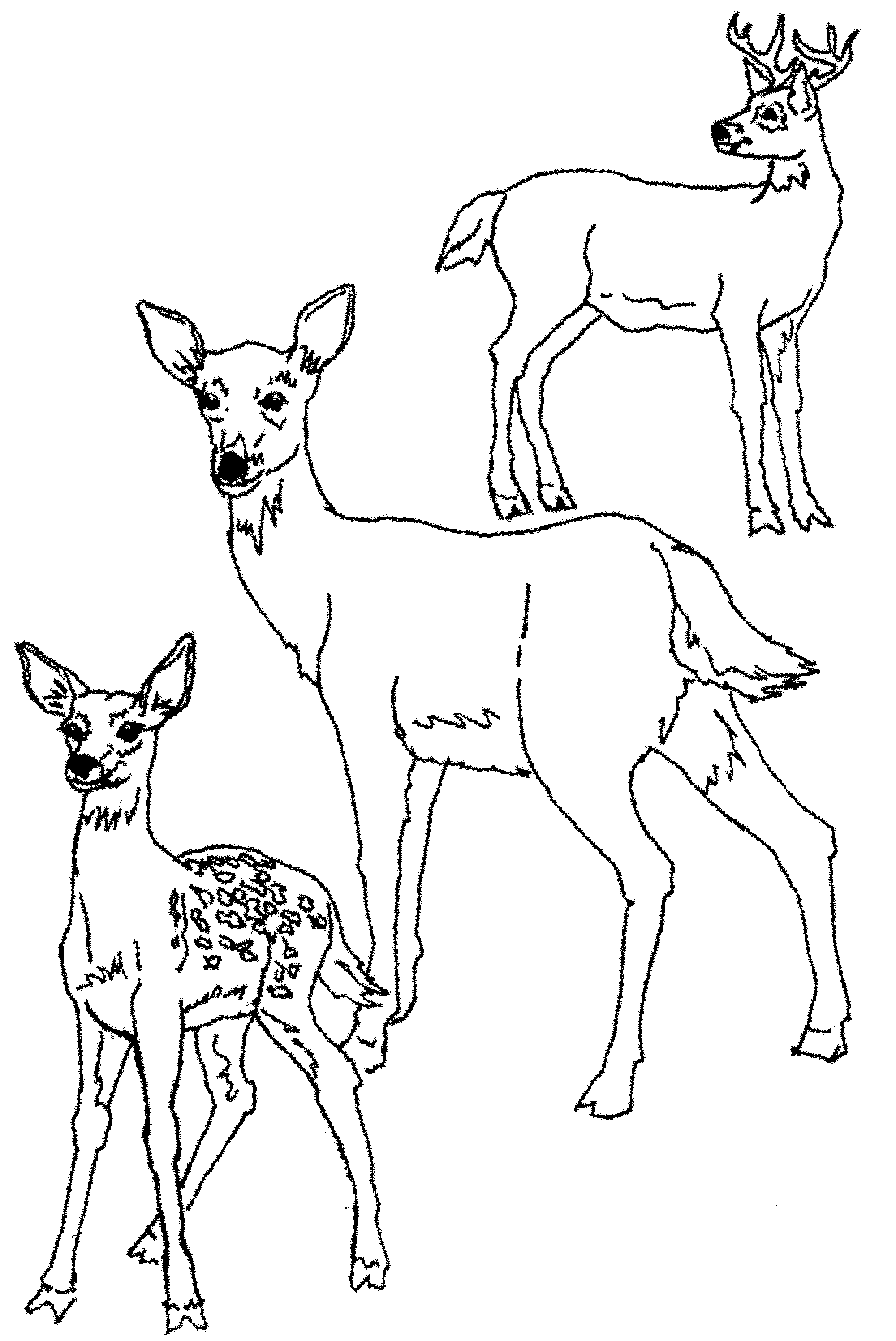 cute-baby-deer-coloring-pages | Deer coloring pages, Horse ...