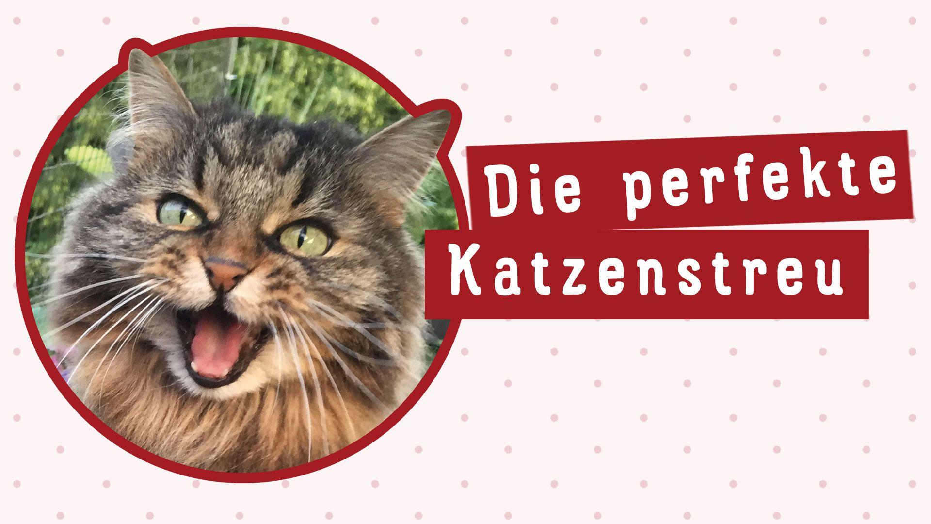 So findest du die richtige Katzenstreu Eigenschaften