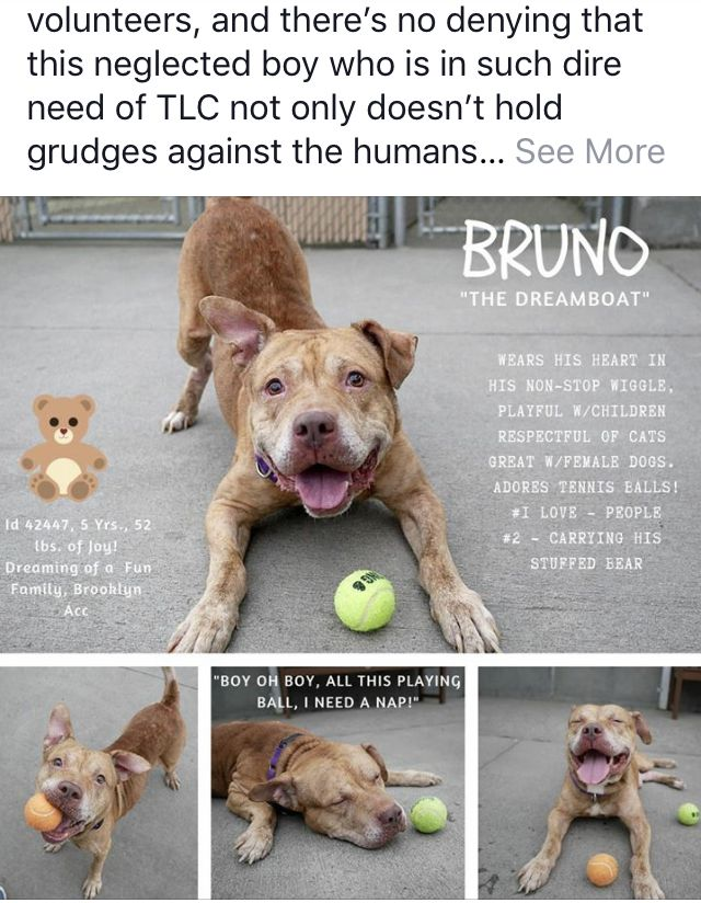 BRUNO ADOPTED ️ ️10/2018 NEEDS HELP 😥😥 (With images