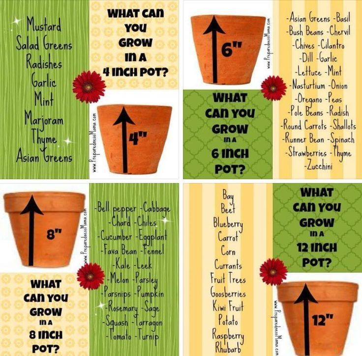 What Size Pot For Veggies And Herbs