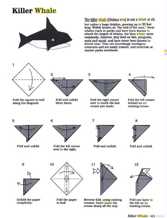 Origami Orca Instructions Part 1 Of 3 Make Sure To Check And Follow